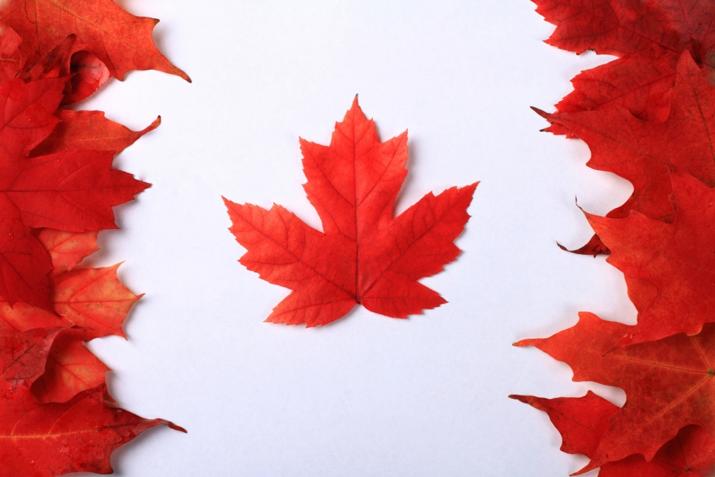 Maple leaves arranged beautifully to create the Canada Flag